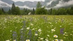 Spring Meadow Backgrounds 32109
