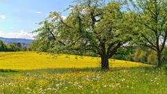 Spring Meadow Wallpaper 32091