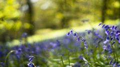 Spring Meadow Wallpapers 32104