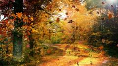 Stunning Fall Scenery 18765