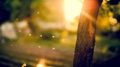 Stunning Sun Rays 29814