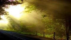 Sun Rays 29816