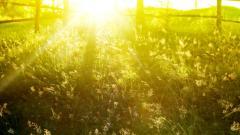 Sun Rays Wallpaper 29805