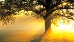 Sun Rays Wallpaper 29808