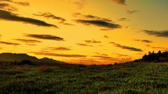 Sunset Yellow 25601