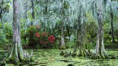 Swamp 33785