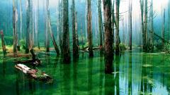 Swamp 33786