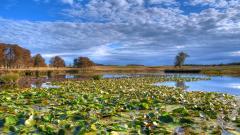 Swamp Background 33789