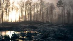 Swamp HD 33792
