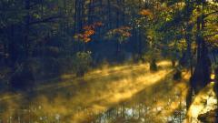 Swamp Wallpaper HD 33791