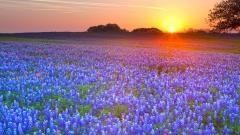 Texas Landscape Wallpaper 24977