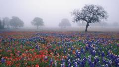 Texas Wallpapers 24973
