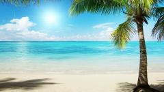 Tropical Background 25213