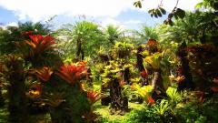Tropical Forest 12793