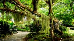 Tropical Forest 12794