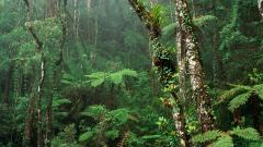 Tropical Forest 12797