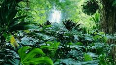 Tropical Forest 12798