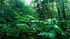 Tropical Forest 12799