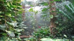 Tropical Forest 12802