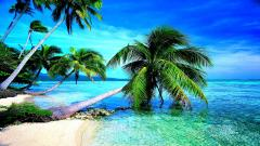 Tropical Wallpaper 25206