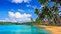 Tropical Wallpaper 25212