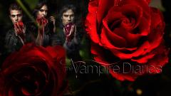 Vampire Diaries Wallpaper 12138