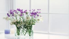 Vase Pictures 39281