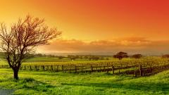 Vineyard Wallpaper 26377