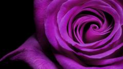 Violet Flower Wallpaper 16145