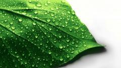 Wet Leaf 27354