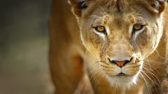 Wild Animal 30853