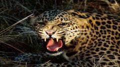 Wild Animal Wallpaper 30848