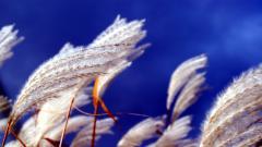 Wind Wallpaper 29110