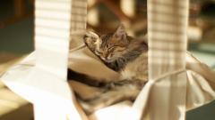 Wonderful Cat Rest Wallpaper 43870