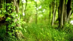 Woods Background 20380