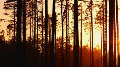 Woods Sunset Wallpaper 20383