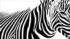 Zebra Background 18505