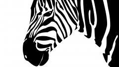 Zebra Backgrounds 18504
