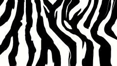 Zebra Print Background 18497