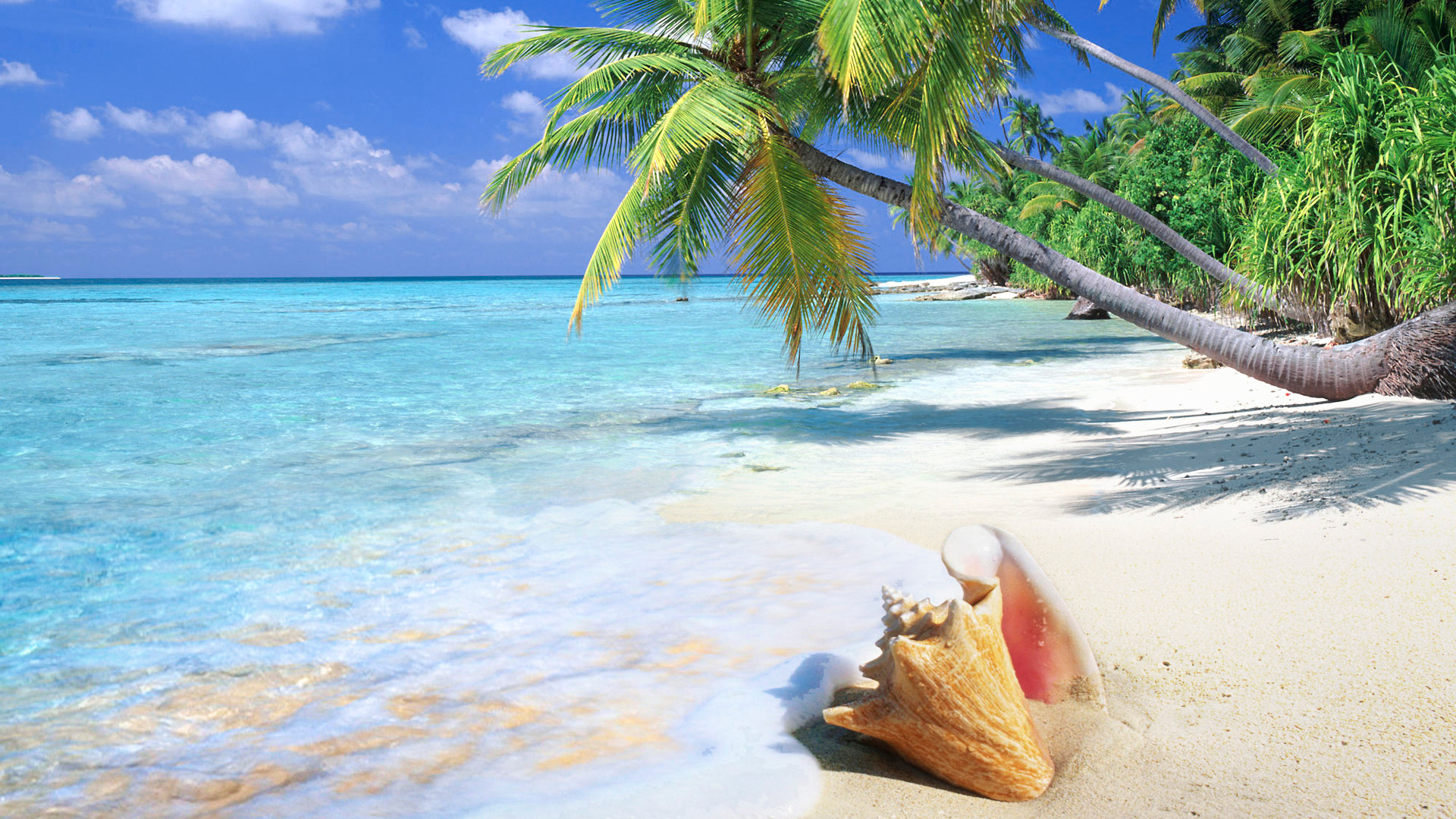 tropical background 25214