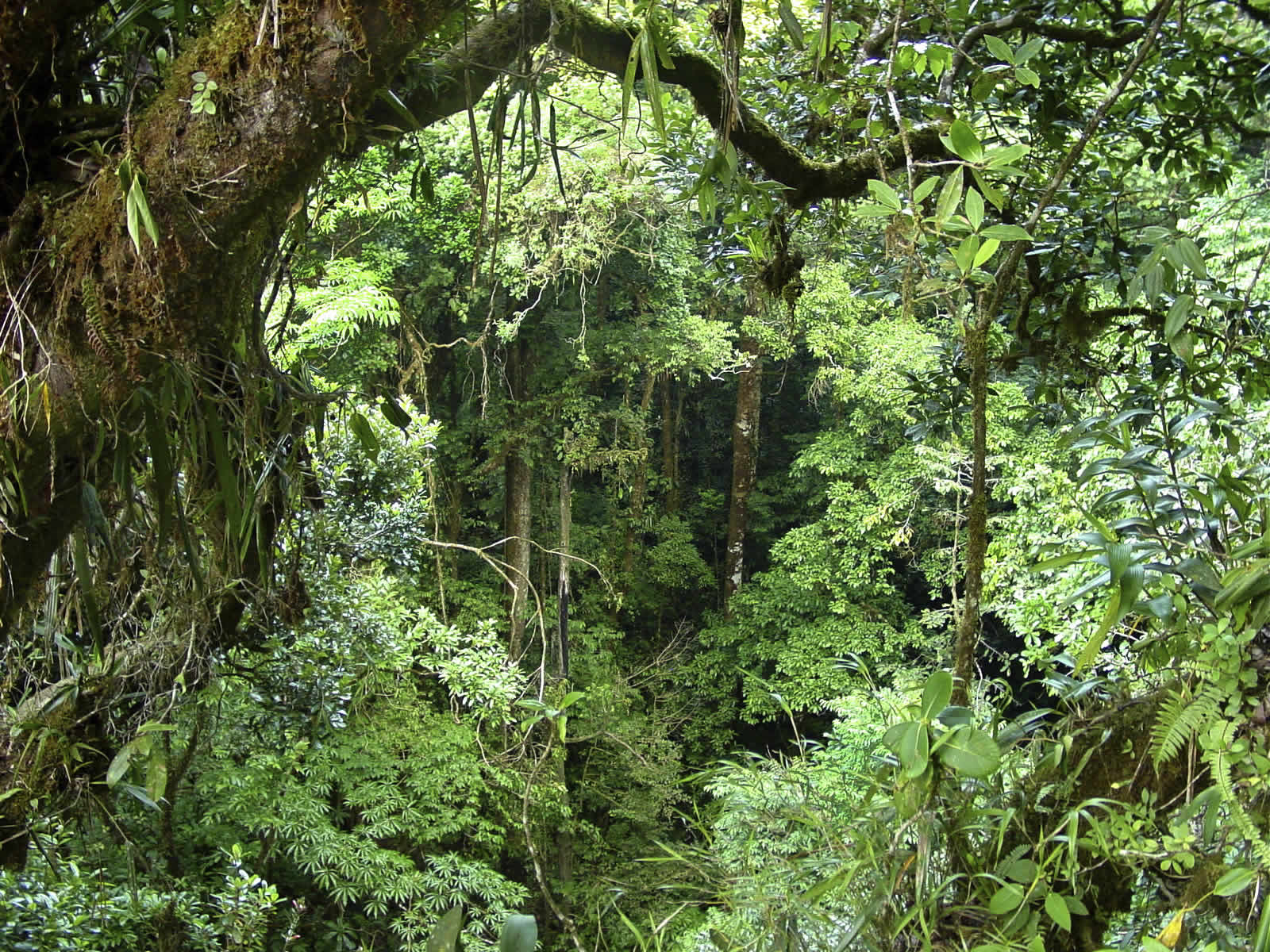 tropical forest 12790