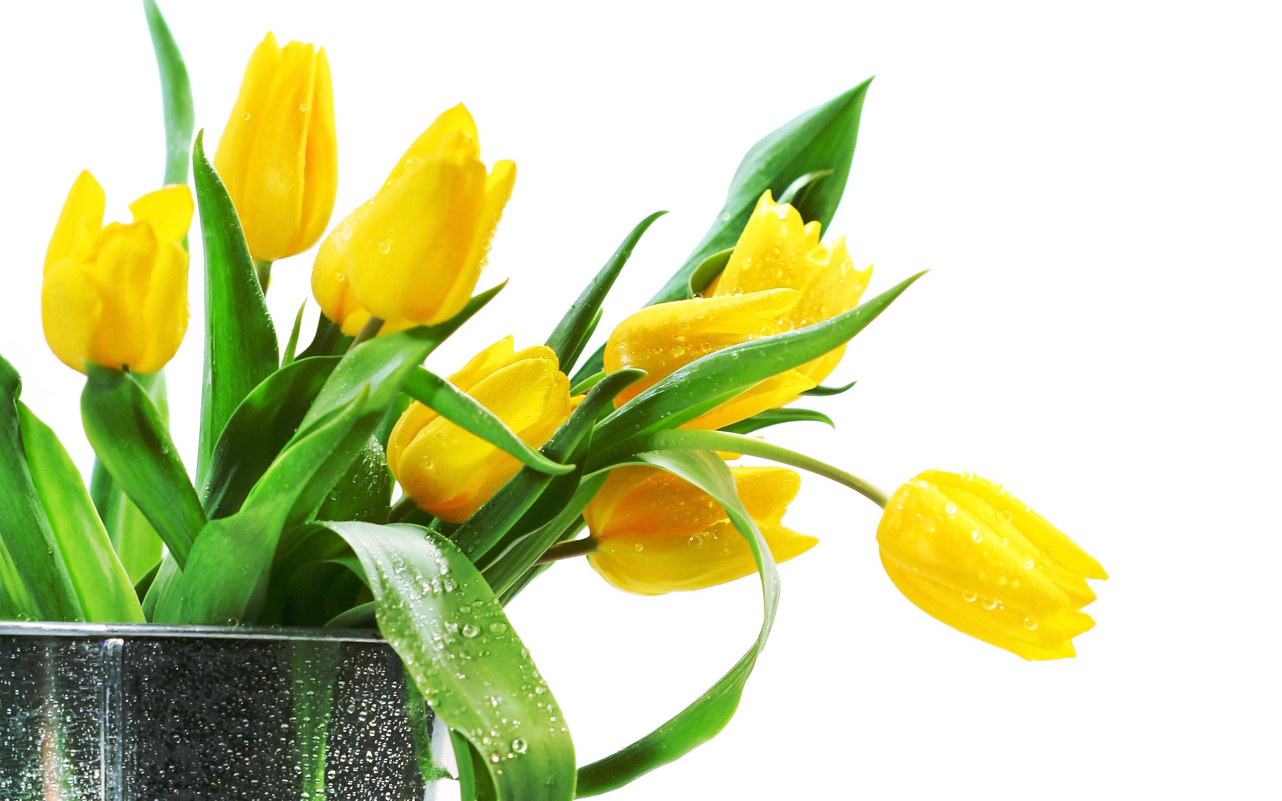 vase background 39291