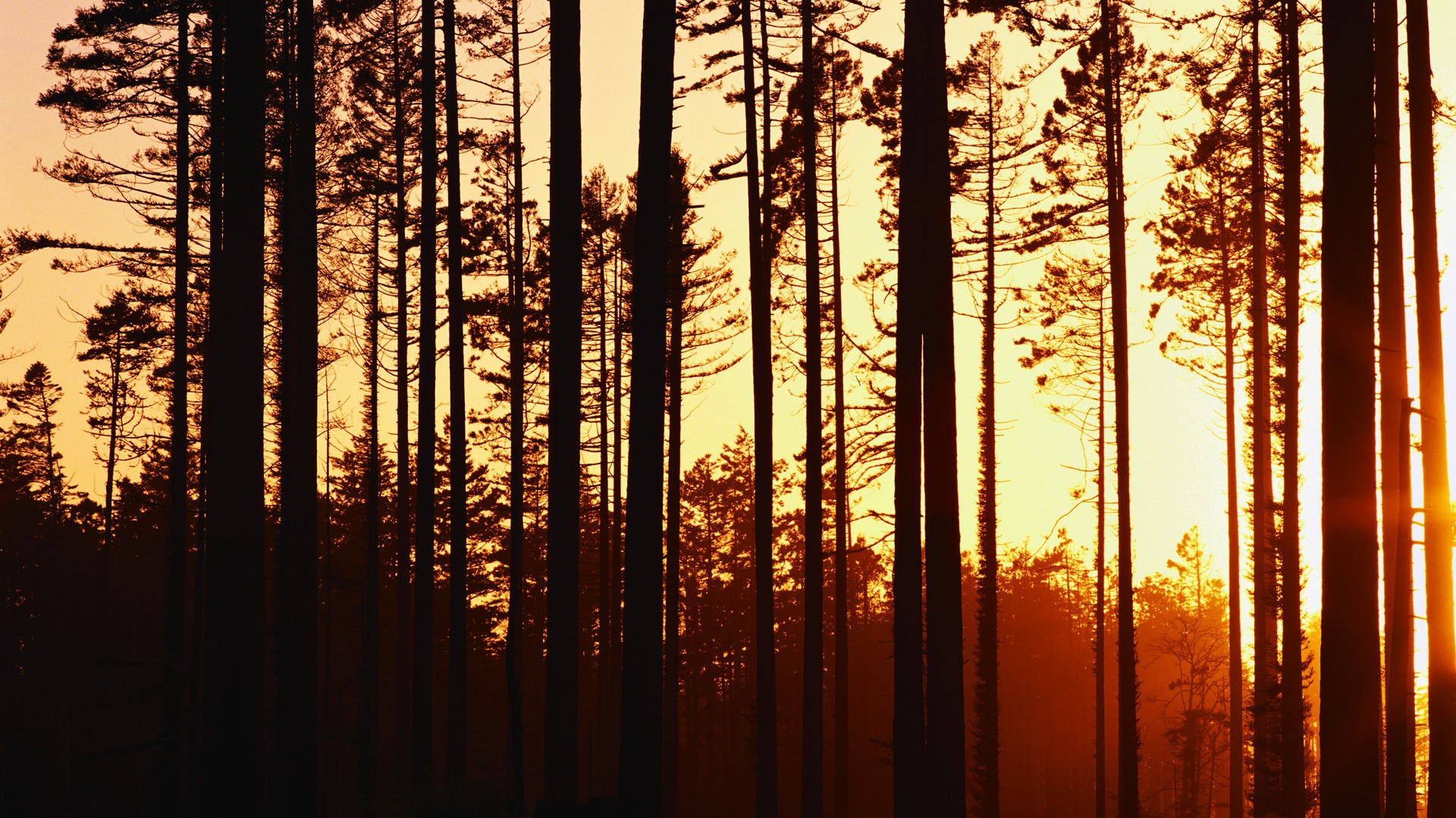 woods sunset wallpaper 20383
