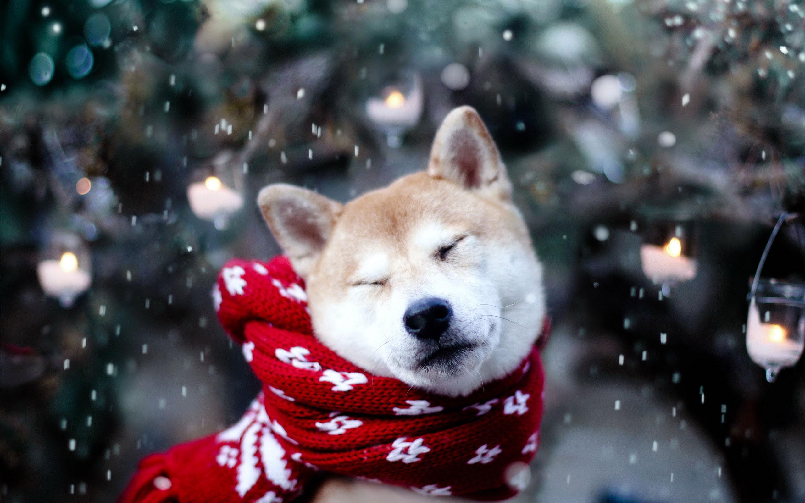 adorable scarf wallpaper 38786