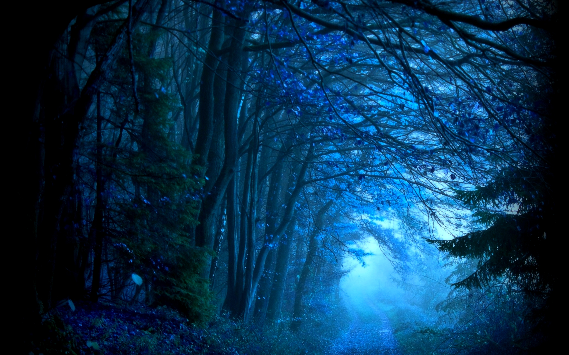 amazing forest wallpaper - photo #16