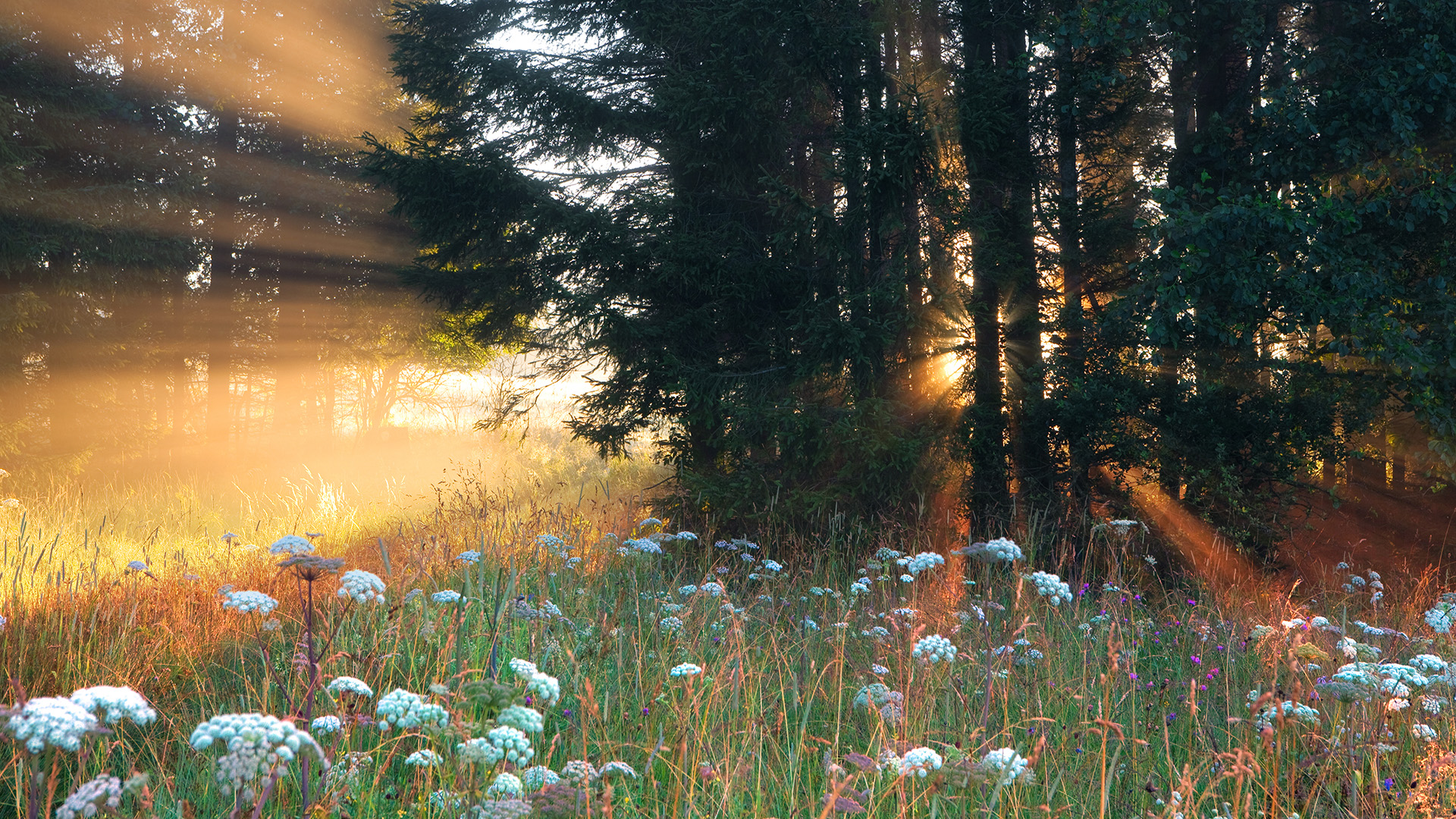 amazing forest sun wallpaper 33433
