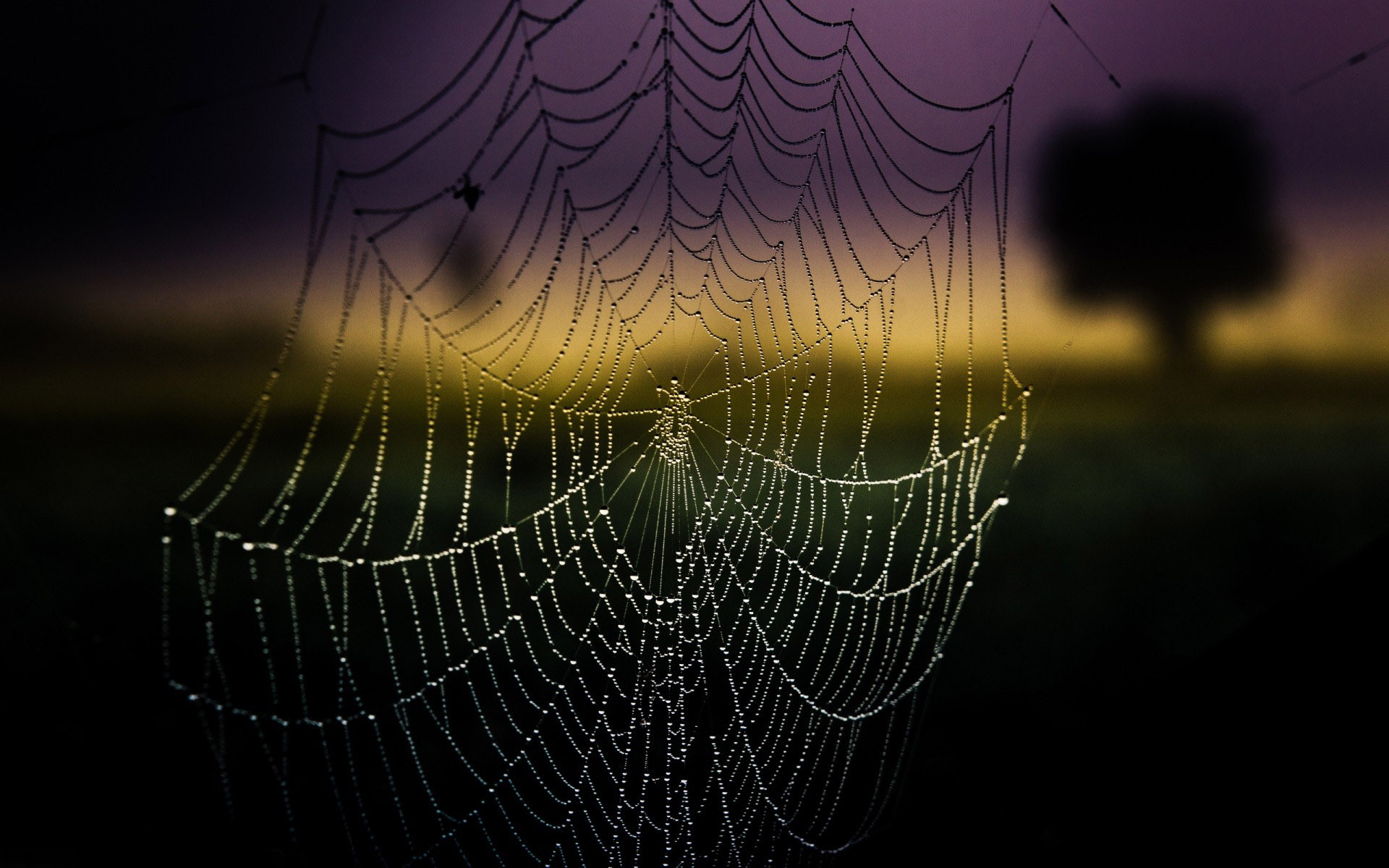 amazing spider web wallpaper 41576