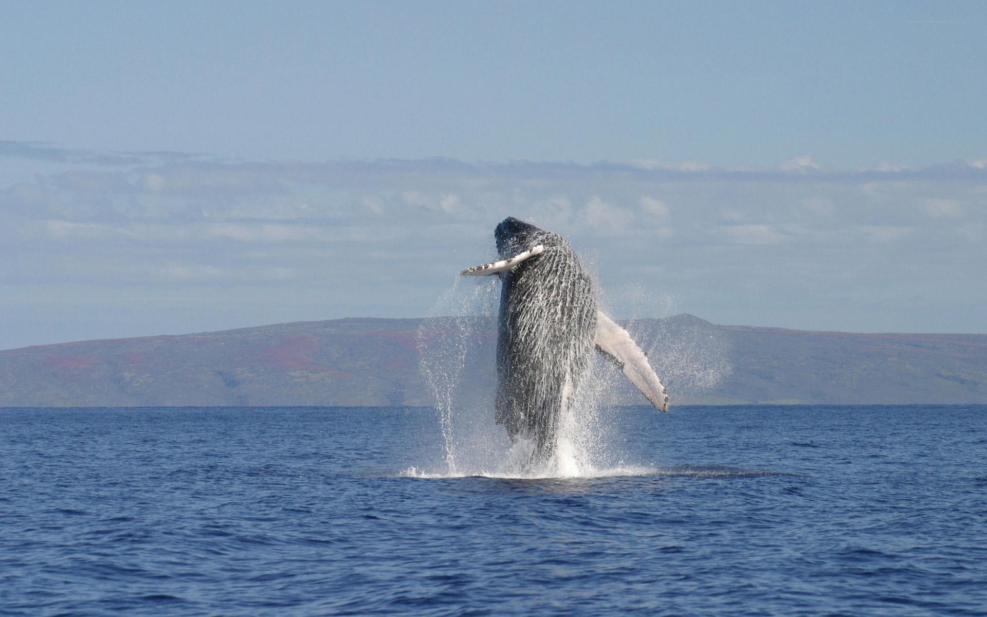 amazing whale wallpaper 23651