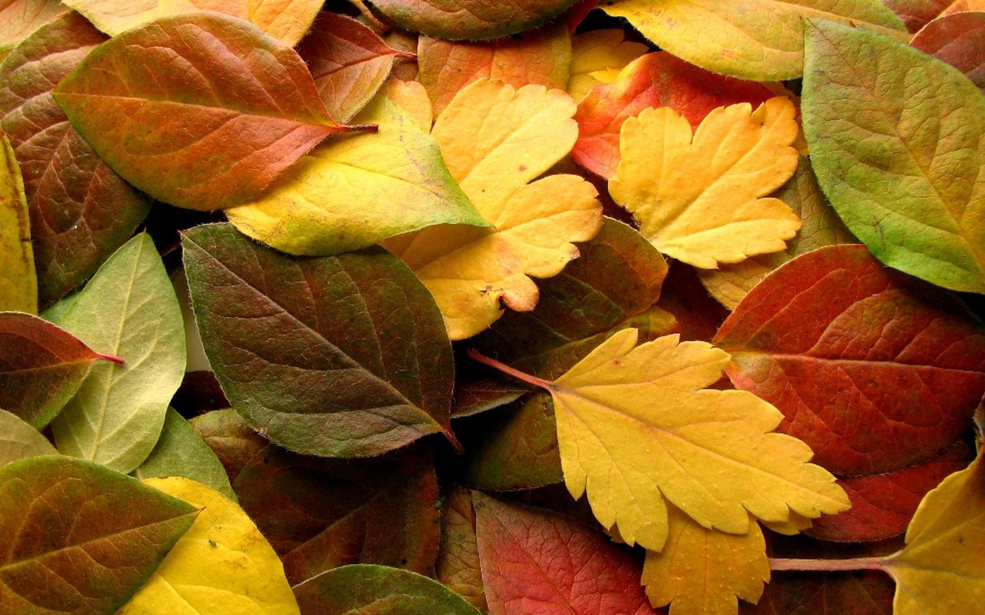 autumn wallpaper 13848