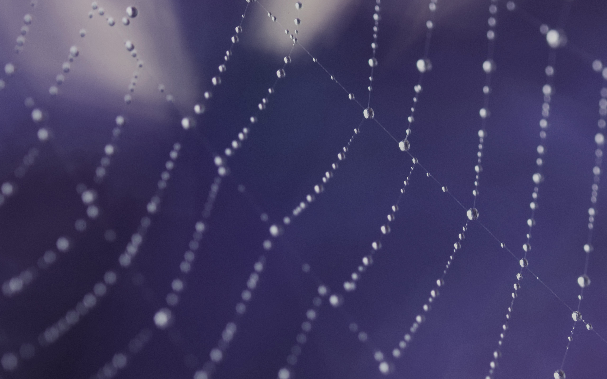 awesome spider web wallpaper 41566
